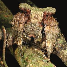 Caerostris darwini common name Darwin's bark spider The webs it spins are made from a material that is considered to be the most durable biological material known. It's nearly twice as resilient as any other known silk, over ten times stronger than Kevlar!2