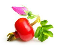 Healing benefit of Rose Hips