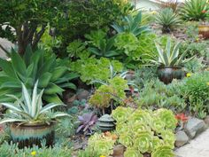 A Guide to Creating a Succulent Garden - See more at: http://worldofsucculents.com/guide-creating-succulent-garden