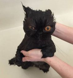 34 Hilariously Cute Photos Of Animals Taking A Bath…. Might Be Too Relaxed. Cat Urine Remover, Pet Urine, Pet Odors, Cute Photos, Funny Photos, Ugly Cat, Cat Bath, Owning A Cat, All About Cats