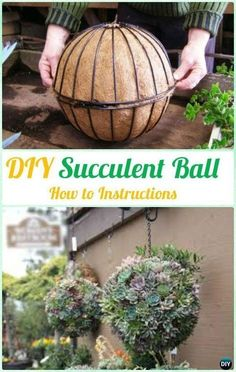Have you always wondered how those hanging ball planters are created? Here's how to create your own DIY succulent ball! Indoor Herbs, Indoor Plants, Indoor Garden, Outdoor Gardens, Herb Gardening, Gardening Books, Organic Gardening Tips, Hanging Succulents, Succulents Garden