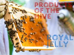 Royal Jelly, with it's special proteins, is responsible for giving the queen bee a long, long life plus an elegant and large body, which make her very fertile. They say royal jelly is the secret of eternal youth!