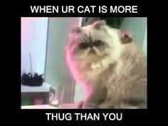 When your cat is more thug than you - YouTube