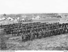 9th Australian Light Horse 1918, Palestine