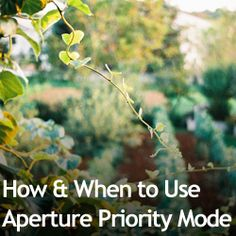When NOT to use AP mode and use Shutter Speed Priority:  Poor light. In low light two worries are exposure (not getting enough light) & camera shake (blurry pictures). In AP you're only dealing with light. In shutter speed priority, you can account for camera shake (1/30 or 1/50 of a second) and aperture will adjust around the speed to produce the exposure.   Even if there's not enough light, the aperture will automatically go to it's widest, and you can play with the photo in post…