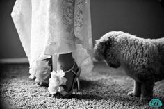 Maybe no one will ever love this bride as much as her dog, but the groom is sure going to try!  Stylish shoes on her wedding day admired by a loving pet in Ventura, California