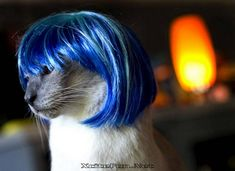 Cute Cats Colorful Makeover Kitty Wigs Fashion Beauty | Hair Wigs ...