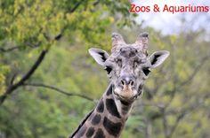 Zoos, Aquariums & Museums
