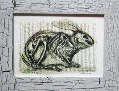 the windmill diary: Biology portfolio Ernst Haeckel, Windmill, Art Forms, Biology, Moose Art, Drawings, Skeleton, Highlights, Vintage