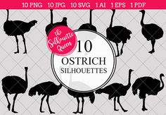 Ostrich Silhouette Vector Graphics includes PNG files with transparent backgrounds at The PNGs are approximately 10 inches at it's widest point. Pine Tree Silhouette, Silhouette Clip Art, Animal Silhouette, Silhouette Studio, Ostrich Bird, Bird Outline, Camelus, Animal Cutouts, Africa
