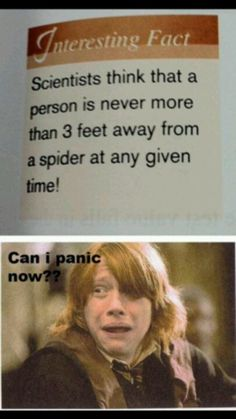 Spiders!!!!