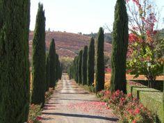 A visit to Ferrari-Carano Vineyards & Winery