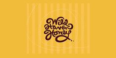 wild_haven_honey_3