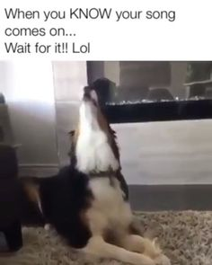 That's what I do when I hear country music. Source by dog dog memes dog videos videos wallpaper dog memes dog quotes dogs dogs pictures dogs videos puppies puppy video Funny Animal Jokes, Funny Dog Memes, Funny Dog Videos, Funny Animal Pictures, Memes Humor, Animal Humour, Dog Humor, Pet Memes, Cute Funny Dogs