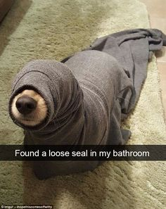 If you like funny dog memes, you've come to the right internet location. These are the 100 funniest dog memes of all time. Funny Animal Jokes, Funny Dog Memes, Cute Memes, Cute Funny Animals, Funny Dogs, Funny Puppies, Cat And Dog Memes, Dog Funnies, Hilarious Jokes