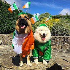 Cutest pic of the day! Festivals, Ireland, Events, Cute, Instagram Posts, Kawaii, Irish