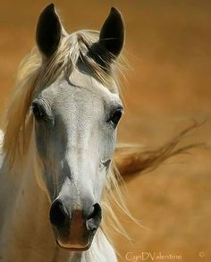 Horses look like some kinda alien but I love them Most Beautiful Animals, Beautiful Horses, Beautiful Creatures, You're Beautiful, Horse Photos, Horse Pictures, Majestic Horse, All The Pretty Horses, Tier Fotos