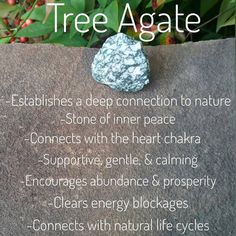 Tree Agate is a very gentle, soothing stone that builds connections with nature & life as a whole. It helps you to do what's best for you while understanding oneness. Crystal Magic, Crystal Healing Stones, Stones And Crystals, Healing Rocks, Agate Meaning, Crystal Meanings, Crystal Names, Gemstone Properties, Tree Agate
