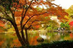 #Fall #Autumn #BeautifulScenery #NaritasanPark