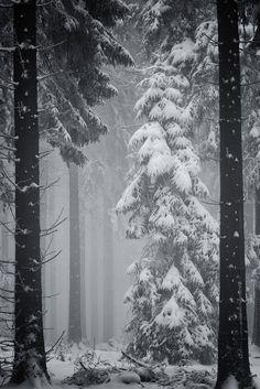Deep Winter | Express Photos