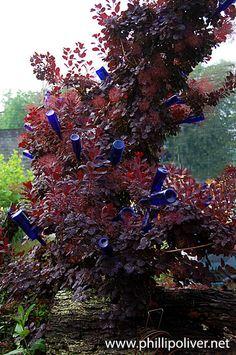 Christopher Mello's West Asheville garden is sublime