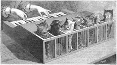 cat piano from la nature