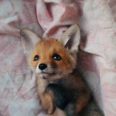 And Other Animals — everythingfox: Important Sunny the Fox Cute Funny Animals, Cute Baby Animals, Animals And Pets, Strange Animals, Cute Creatures, Beautiful Creatures, Animals Beautiful, Fox Pictures, Cute Animal Pictures
