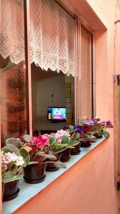 Violetas na janela da cozinha.