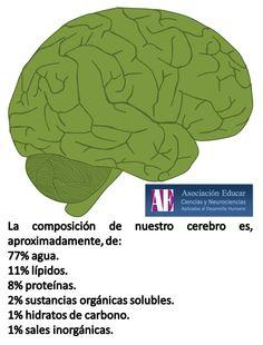 La composición de nuestro cerebro. - Asociación Educar - Ciencias y Neurociencias aplicadas al Desarrollo Humano - www.asociacioneducar.com