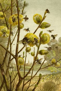 Bees & Wasps, by F.W. Kuhnert