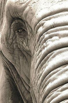 Elephant Face! …