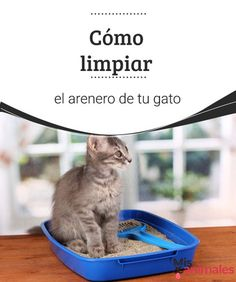 Cómo limpiar el arenero de tu gato  Encuentra en este artículo, todo lo que tienes que sabes para limpiar el arenero de tu gato. En unos cuantos pasos quedará limpio y tu minino te lo agradecerá. #higiene #gato #arenero #consejos