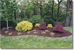Shrub Bed Projects