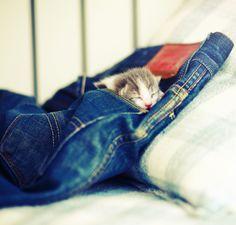 toda la ternura de una siesta