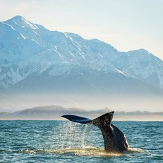 """Whale watching in New Zealand from - Kyle Te Kiwi 