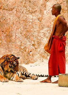 Tiger Temple near Kanchanaburi, Thailand (July 2005)