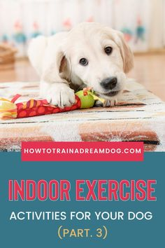 What do you do indoors to exercise the energy right out of your dog? Many times the secret to settling our dogs down is good old fashion exercise. I'm talking about walks, jogs, and romps in the yard with dog play dates. But what happens if the weather is crummy or you can't go outdoors at all? Puppy Obedience Training, Puppy Training Tips, Crate Training, Training Your Dog, Barrel Racing, Exercise Activities, Puppies Tips, Dog Health Care, Go Outdoors