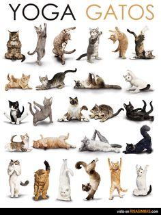 Gatos haciendo yoga.
