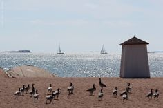 Hanko, Most southern point in Finland.and many welcoming birds! Great Places, Places To Go, Beautiful Places, Finland Travel, Scandinavian Countries, Arctic Circle, Famous Places, Baltic Sea, Photo Location