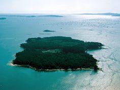 Bosques de Galicia - Cortegada: la isla de los laureles - GALICIA