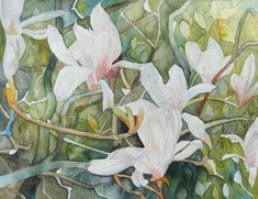 Magnolien Blüten als Frühlingsboten (c) Aquarell von Frank Koebsch | Drängeln erlaubt (c) Aquarell von Frank Koebsch