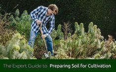 Preparing Soil Climbing Shade Plants, Climbers For Shade, Herbaceous Border, Chelsea Flower Show, Garden Borders, Garden Tools, Garden Ideas, Balcony Garden, Growing Plants