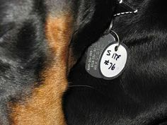When camping, along with your dog's regular tags, add a paper tag with a metal…