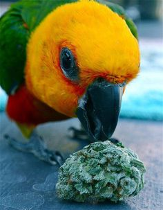 Haha! Marijuana humor. #pets   Follow us online: TW/IG: @SacCannabisClub FB: /SacramentoCannabis