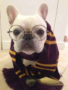 This flawless Harry Potter impression.