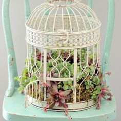Learn how to plant this beautiful succulent garden in an old birdcage. This would make a gorgeous wedding table centerpiece.
