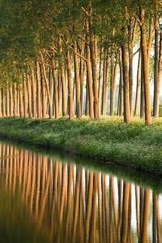 Damse Vaart at sunrise, Damme, Belgium | Most Beautiful Pages