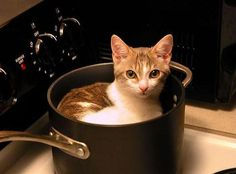 Around here, cat hair is a condiment! If he fits, he sits.