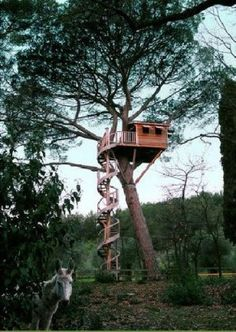 """Your thoughts on this Tree House? La Cabane Perchee (""""cabins perched"""") is a French company that designs, builds and installs gorgeous rustic treehouses like this for clients around the world. Winding Staircase, Spiral Staircase, Patio Grande, Cool Tree Houses, Tree Tops, In The Tree, Play Houses, Cave Houses, My Dream Home"""
