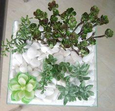 Plantas suculentas dentro de casa!